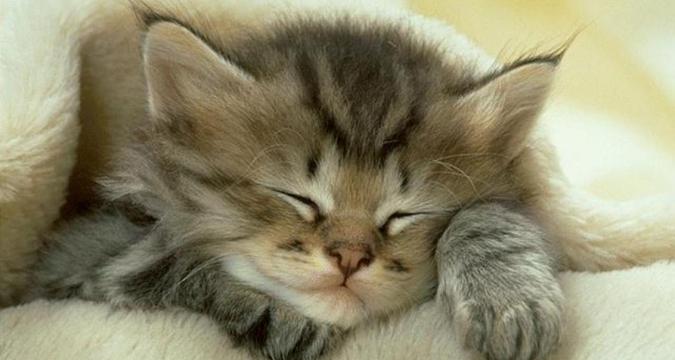 Kedi Gençlik Hastalığı