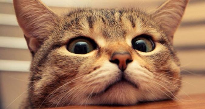 Kediler Bize Neler Anlatıyor?