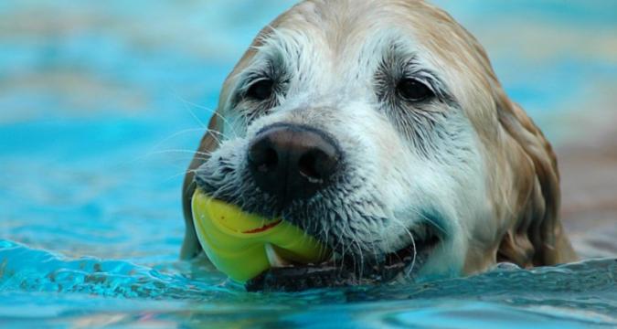 Köpeğim Yüzme Öğreniyor