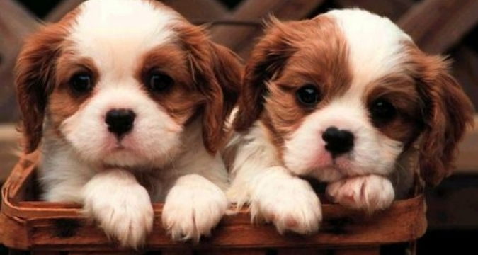 Yavru Köpeklere tuvalet eğitimi verilirken nasıl bir yol izlenmedir ?