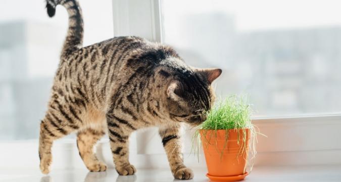 Kedilerin Yememesi Gereken Bitki ve Kimyasallar Nelerdir?
