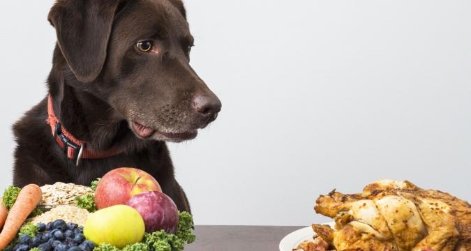 Köpekler İçin Zararlı Olan Besinler Nelerdir?