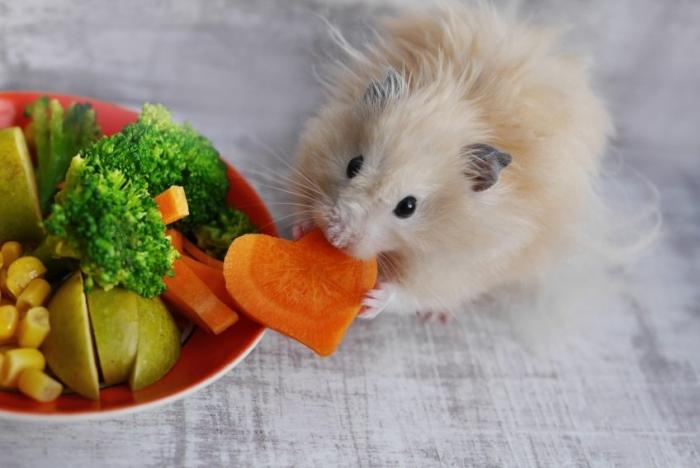 hamster sebze