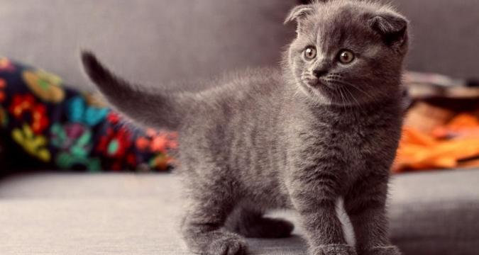 Kedilerde tüy yumağı oluşumunun nedenleri nelerdir?