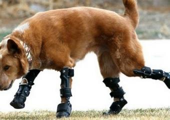 Köpekler İçin Protez Seçerken Dikkat Edilmesi Gerekenler