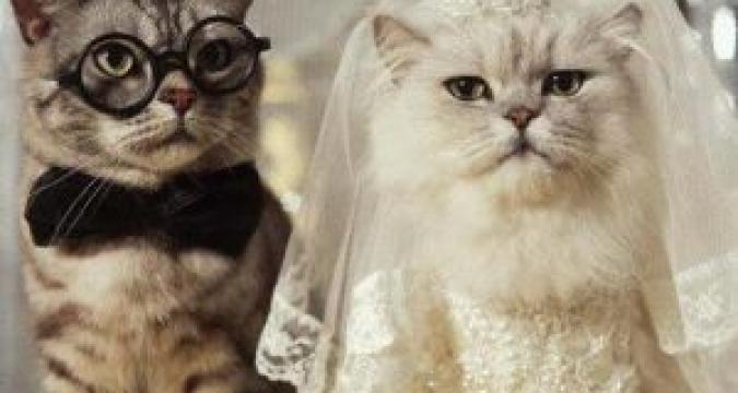 Kedi Ve Köpeklerde Kızgınlık Dönemi