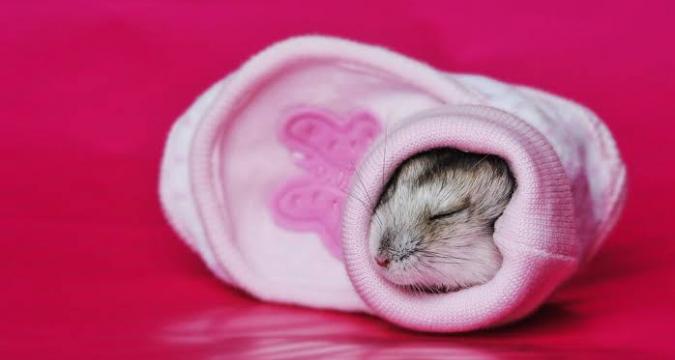 Hamsterların Uyku Eğilimi