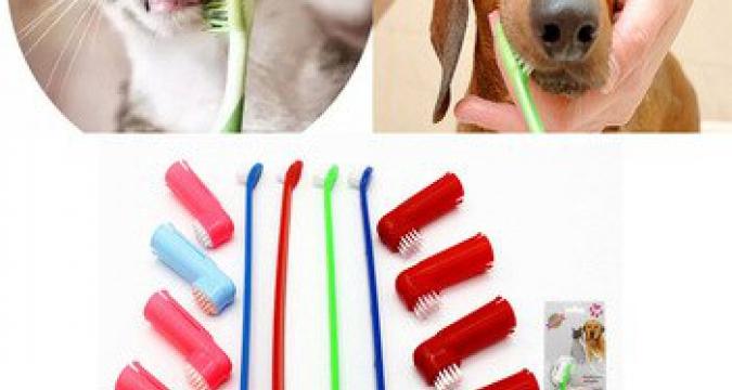 Kedi ve Köpeklerde Diş Sağlığı