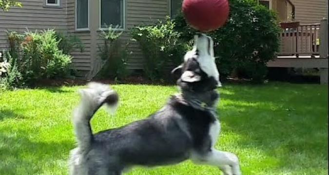 Köpek Gelişiminde Oyunun Önemi