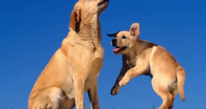 Köpeklerimizin Vücut Dili Bize Ne Anlatıyor?