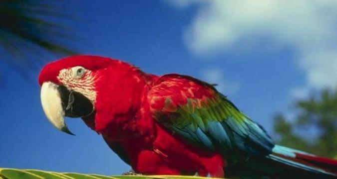 Papağan Bakımı İle İlgili Gerçekler