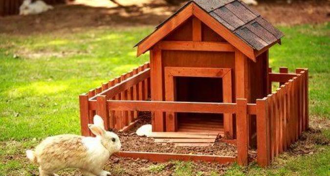 Tavşan Beslemenin Püf Noktaları