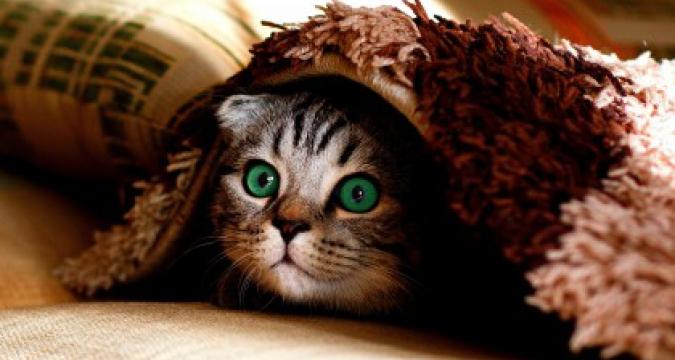 Kedinizle Oyun Oynama Yolları