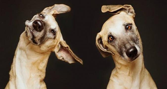 Köpeklerin Denge Kaybı