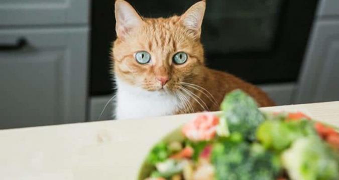 Kedinize Bunları Yedirmeyin!