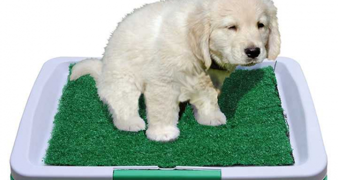 Yavru Köpeğiniz İçin Tuvalet Eğitimi