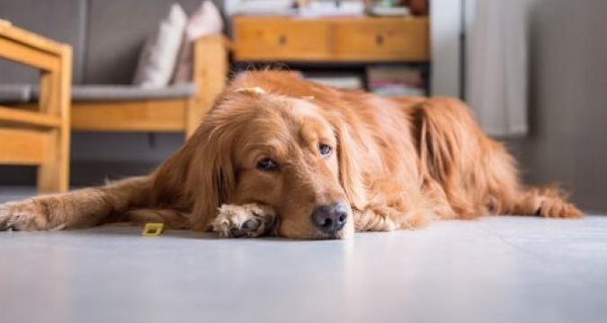 Hareketsiz Yaşam Tarzı Hayvanları Nasıl Etkiler?