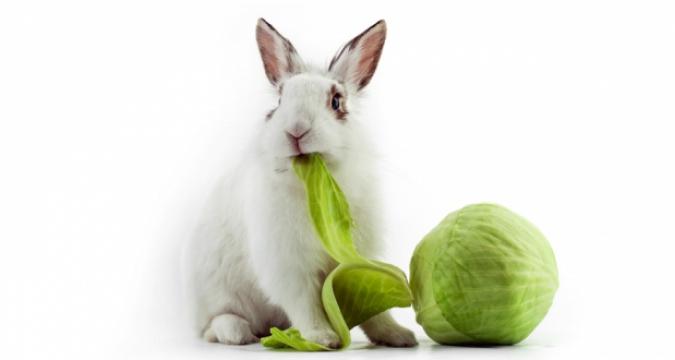 Tavşanlarda Beslenme ve Ağız Sağlığı