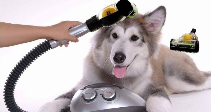 Evcil Hayvan Besleyenlerin Temizlik Yöntemleri