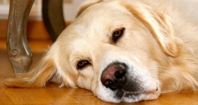 Evde Olmadan Evcil Hayvanınızla Nasıl İlgilenirsiniz?