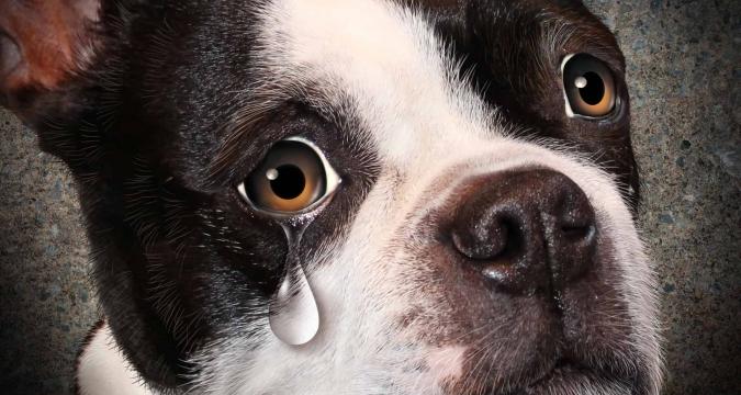 Köpeklerin Ağlama Sebepleri