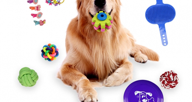 Köpekler İçin Uygun Oyuncak Seçimi