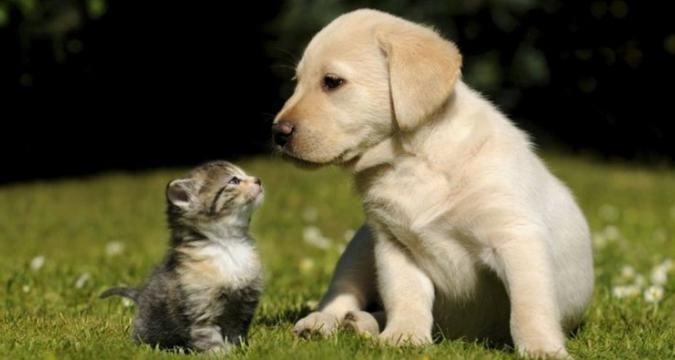 Aynı Evde Kedi ve Köpek Olur Mu?