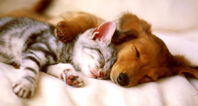 Kedi ve Köpeklerde Kısırlaştırma!