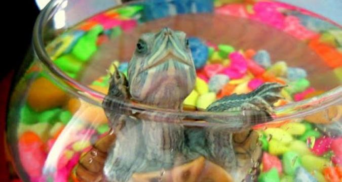 Neden Kaplumbağa Beslemelisiniz?