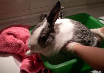 Tavşanınızı Yıkamak Doğru mu?